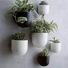Khử mùi trong nhà vệ sinh bằng cây xanh hiệu quả, tốt cho sức khỏe