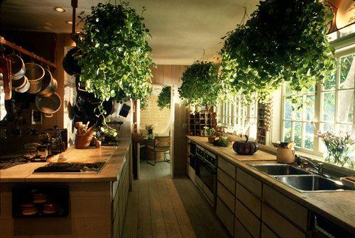Bố trí cây xanh để làm sạch không khí