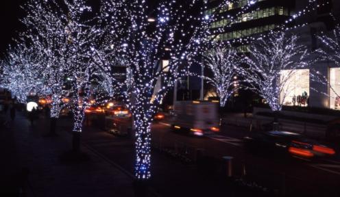 Quấn bóng đèn dây trên các nhánh cây